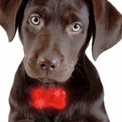 Colgante luminoso de Huesito para mascotas, varios colores